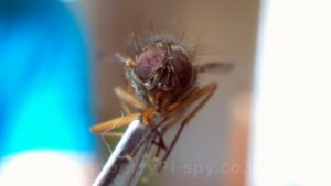Pi Macro Fly Photo