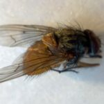 Pi Macro Fly Photo