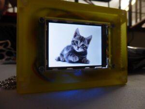 Kitten Display