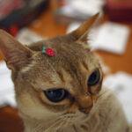 Mooncake the Raspberry Pi Cat